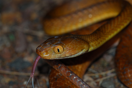 snake d h lawrence essays Snake by dh lawrence in snake, lawrence tells of a confrontation with a snake he had at his water trough this poem is actually based on an incident that.
