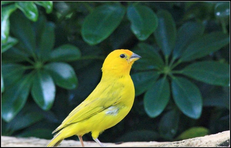 BIRDS_PARADISE_(7778134918)
