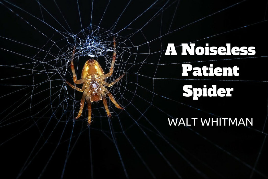 a noiseless patient spider analysis essay A poem analysis: a noiseless patient spider by walt whitman analysis of because i could not stop for death this essay is very well written.