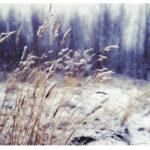 solitary reaper poem summary pdf